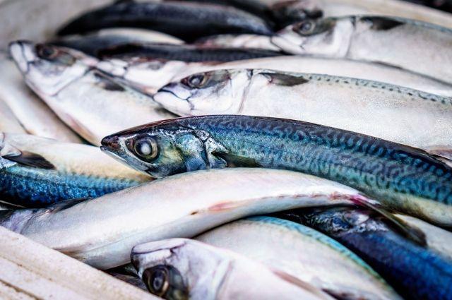 Экологи выясняют причину массовой гибели рыбы в водоемах Оренбуржья.