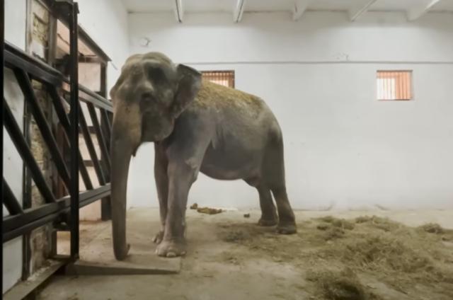 Слоних после 40 лет выступлений в цирке отправили на заслуженный отдых в Крым.