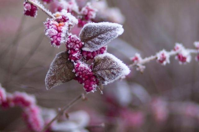 В Украину идет похолодание: ожидается мокрый снег.