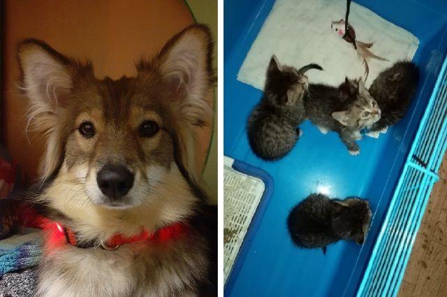 Люсьена и спасённые с улицы котята.