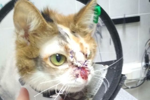 Кошке Марте сделали ринопластику и ампутировали лапу.