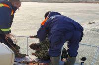 В Оренбуржье прошла спасательная операция.