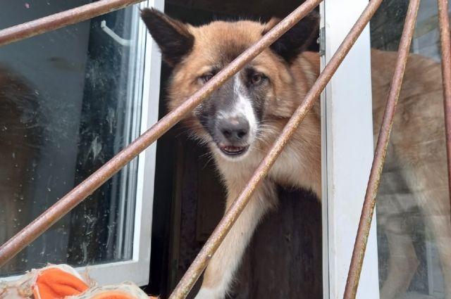 Дети кидали псу кору и он её ел - настолько голоден.