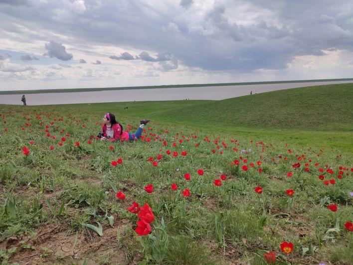 В этом году из-за дождей и холодов тюльпаны зацвели на две недели позже