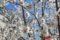 Погода на 27 апреля: в Украине ожидается прохладная погода