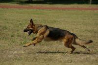 УФСИН Оренбургской области готово передать в добрые руки собаку.
