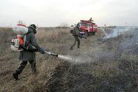 На 42% выросло за год количество природных пожаров в области (по югу страны этот рост составил 14,8%).