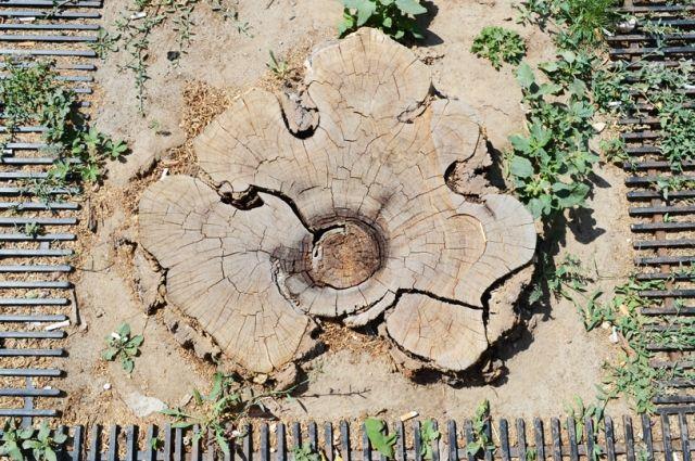 В Оренбурге завершено расследование уголовного дела по факту незаконной вырубки деревьев.