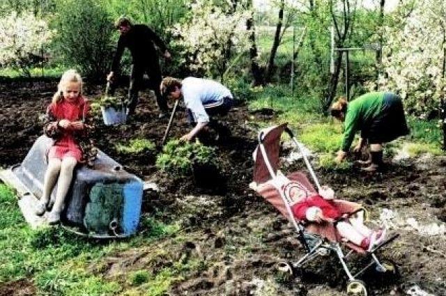 С советских времён у многих было принято проводить время на даче за огородными работами.