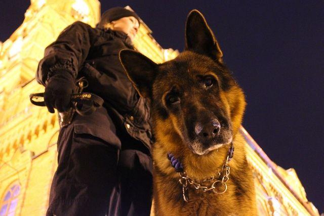 Кинологическая собака Кайзер рядом с храмом Александра Невского