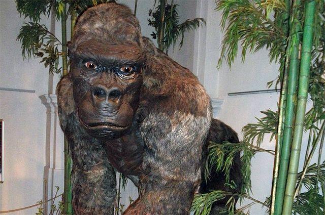 Были гигантские родственники и у человека. На территории современных Китая, Индии, Вьетнама и Таиланда водились приматы, которых учёные так и называют – гигантопитеки.