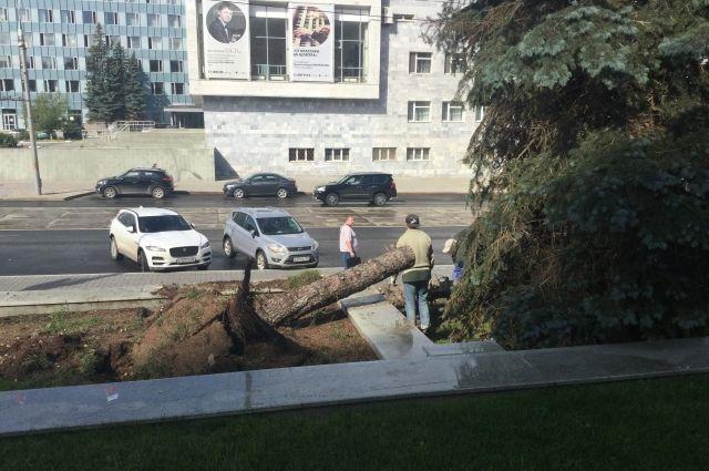 В МЧС поступают многочисленные сообщения о сломанных деревьях и обрушенных остановках.