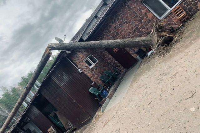 дерево повалило ветром.