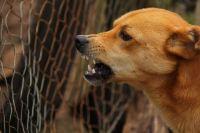 В Новотроицке бродячая собака откусила губу шестилетней девочке.
