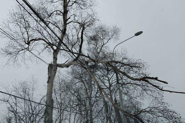 На воздушной линии электроснабжения повисла сломанная ветка дерева.