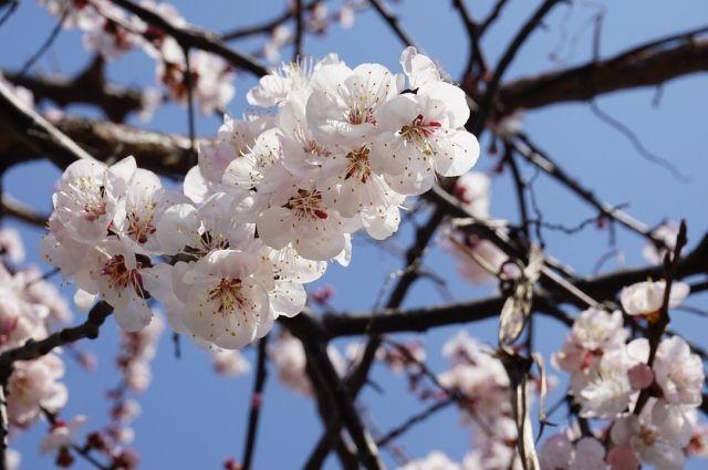 В период с 4 по 7 мая в регионе сохранится неустойчивая погода.