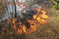 С начала 2021 года на территории Оренбургской области зарегистрировано 25 лесных пожаров.