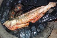 Через границу в Оренбуржье незаконно пытались ввезти 6 тушек рыбы.