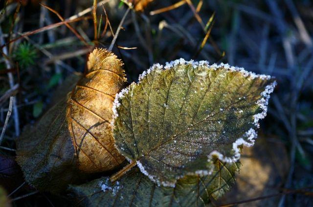 А мае в средней полосе ещё вполне возможны ночные заморозки.
