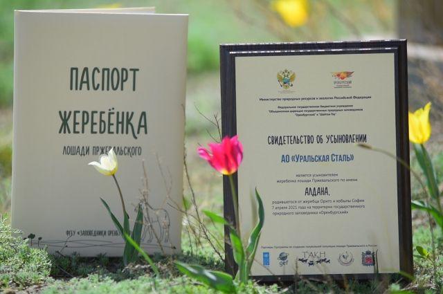 Уральская Сталь приняла участие в благотворительной программе «Усынови жеребёнка лошади Пржевальского» .