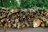 СК Оренбуржья возбудил уголовное дело после незаконной вырубки 230 здоровых деревьев в областном центре.
