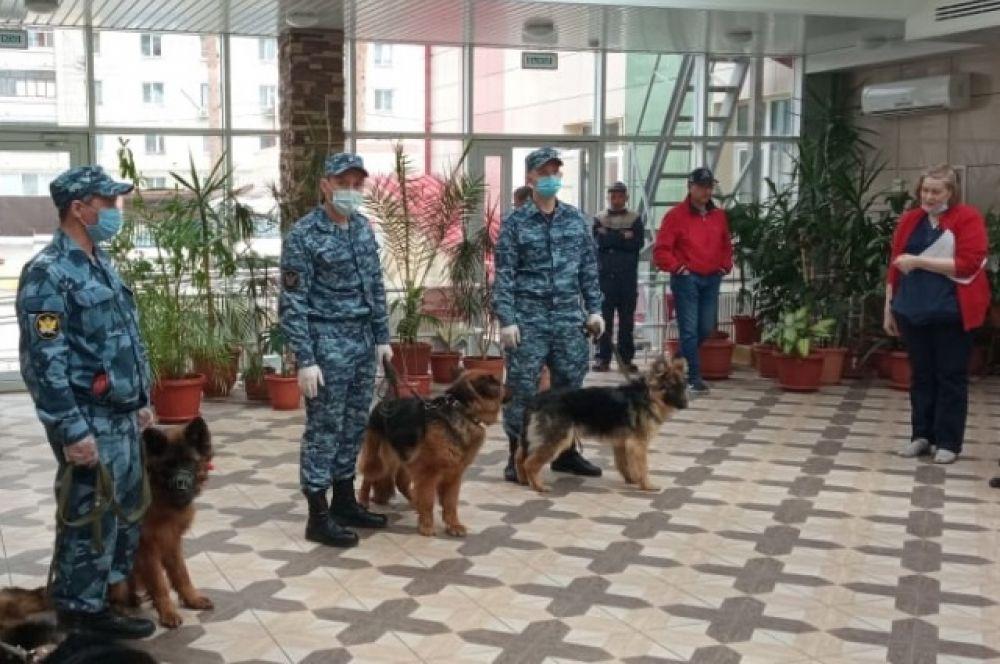 Собаки исполняли команды «Сидеть», «Лежать», «Голос», а еще искали в коробках «запрещенные» предметы.