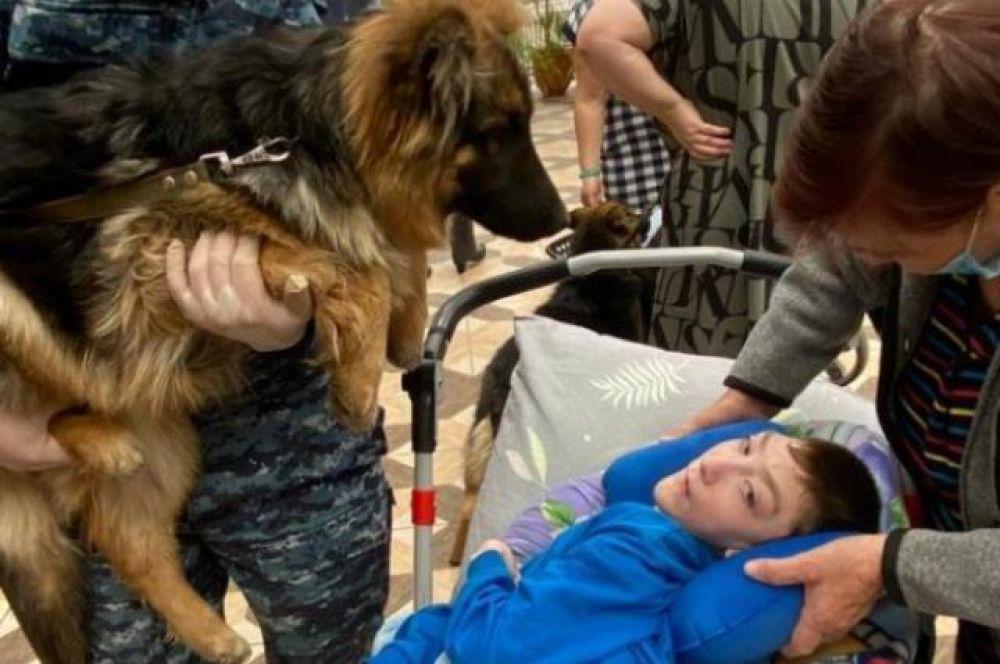 В хоспис приехали три взрослых собаки и два подростка со своими наставниками.
