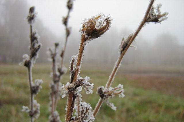 В Киеве средняя температура апреля оказалась холоднее климатической нормы