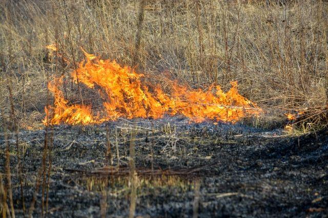 Уголовное дело возбуждено после пожара в нацпарке в Саратовской области