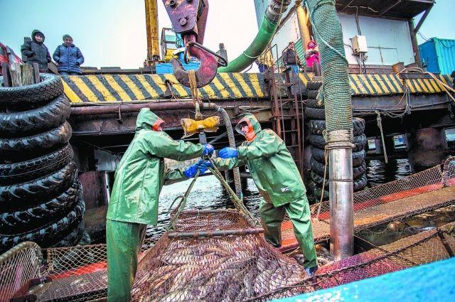 Экономика Южных Курил в основном связана с рыболовством и переработкой рыбы. Сейчас на острове идёт малая путина на треску.
