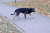 В Оренбурге еще один ребенок пострадал от нападения бездомной собаки.