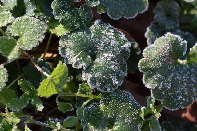 В северных и центральных районах температура воздуха и на поверхности почвы составит 0…-5 градусов.