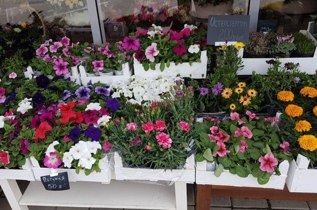Краснодарский цветочный рынок в мае.