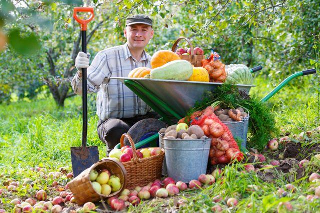 Урожай без химии. Чем заменить синтетические удобрения на даче
