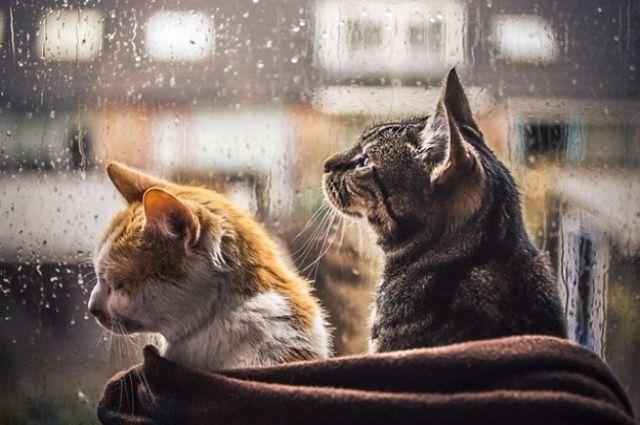 Дожди и грозы: синоптики рассказали о погоде на выходные и 9 мая