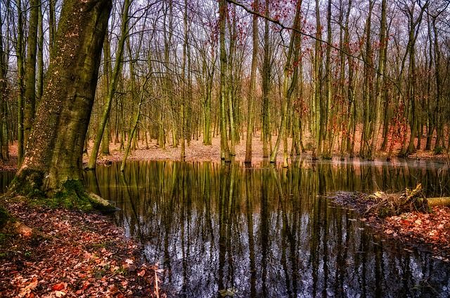 Поиски осложняет болотистая местность.