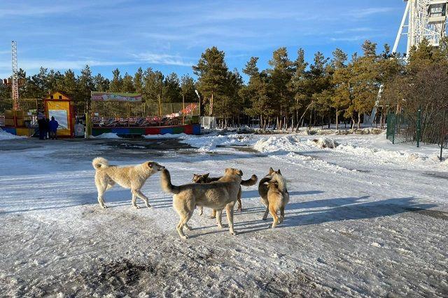 В Грозном придумали, как обезопасить жителей и туристов от бродячих собак