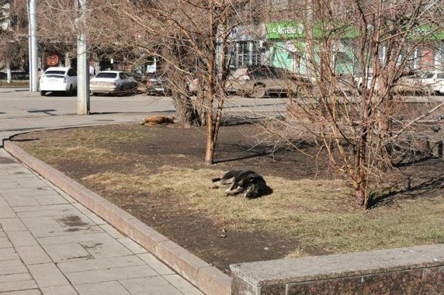 Отлов бездомных собак должен быть гуманным.