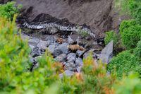 Научный сотрудник заповедника считал следы медведей у реки.