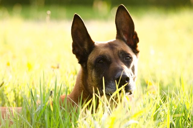 Собака взяла след и повела полицейских в глубь леса