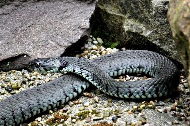 В Адамовском районе змея укусила четырехлетнего ребенка.
