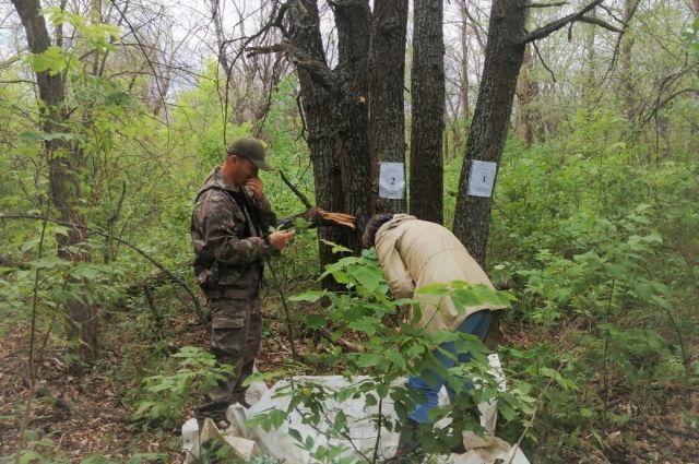 На территории земель лесного фонда региона борются с непарным шелкопрядом.