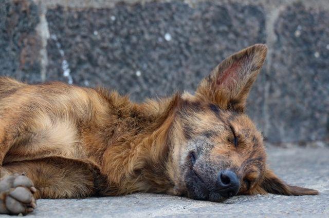 В Харпе живодер расстрелял чипированную собаку