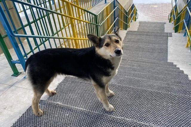 Отлов бродячих собак в Красноярске осуществляют 3 организации.