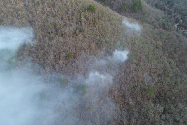 Горит более 300 гектаров леса.