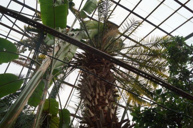 Ботанический сад ПГНИУ будет принимать экскурсии каждые полчаса.