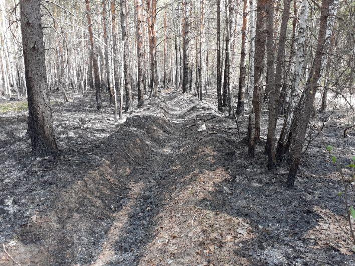 Встречный пал. Горят леса: как тушат пожары в Тюменской области, 2021.