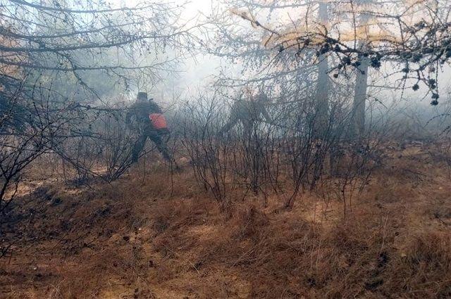 Минлесхоз Башкирии запретил гражданам походы в лес