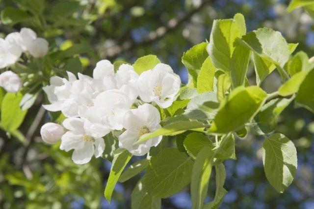 17 мая: праздник, день ангела, календарь стрижек, особенности даты