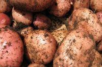 Мужчина намеревался посадить на очищенном участке картошку.